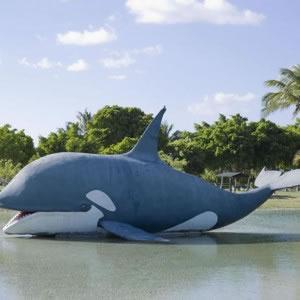 Paraíso Artificial - Orca