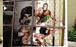 Los Monos | 2009 | Fotografía a color
