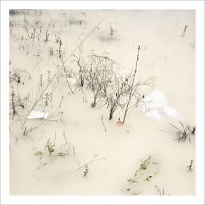 Like painting birds #5 | 2005 | Inyección de tinta sobre papel de algodón | 50 x 50 cm