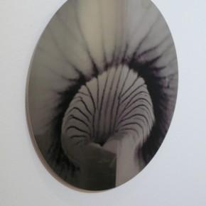 Orchos#1 (2011) | Fotografía impresa sobre acero inoxidable | 32 x 30 cm | Ed. de 5