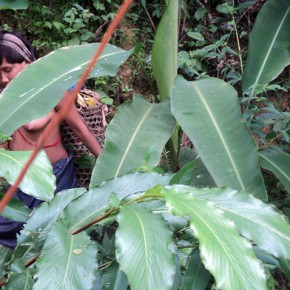 Urihitherioma (Mujer de la selva) | 2012-2013 | Fotografía intervenida con acrílico | Serie de 3 | 48 x 32 cm