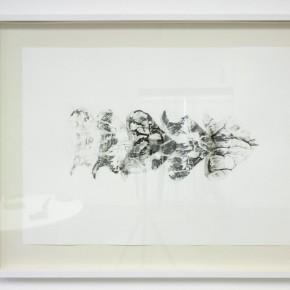 Serie Lepidopteros. Attacus | Vista de sala