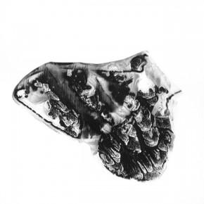 Serie Lepidópteros | Palometa # 4 | 2013 | Tinta de pigmento y agua sobre papel | 55 x 37 cm