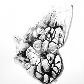Serie Lepidópteros | Palometa # 5| 2013 | Tinta de pigmento y agua sobre papel | 55 x 37 cm