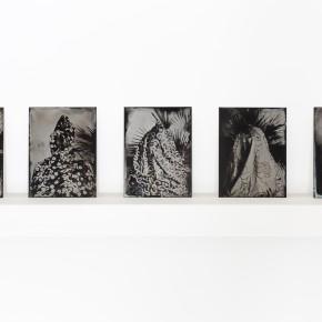 Series Impronta | 2013 | Edición sobre papel en base a fotografía al colodión húmedo sobre aluminio|Lucia Pizzani